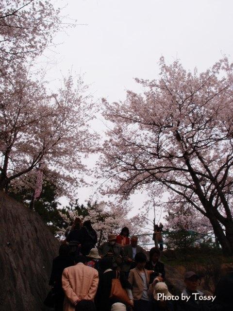 桜並木へと続く石段