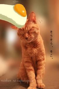 091102_ruichan_003.jpg