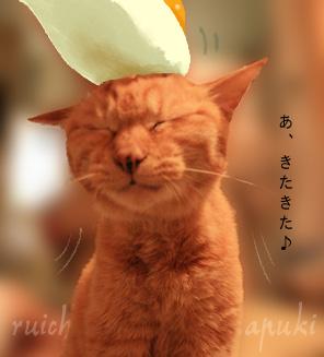 091102_ruichan_006.jpg