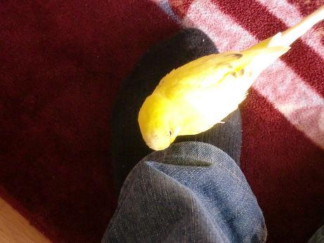 足も好き!