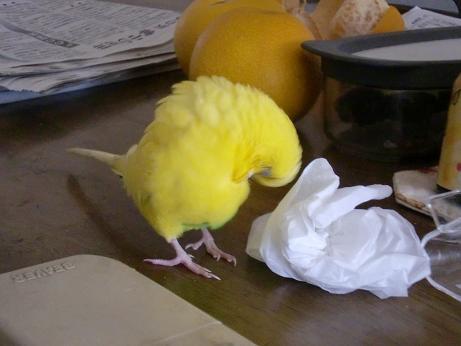 キレイな黄色!