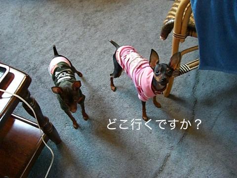 misugi41.jpg