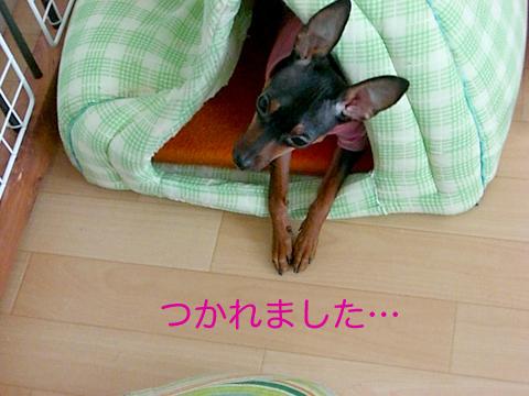 misugi57.jpg