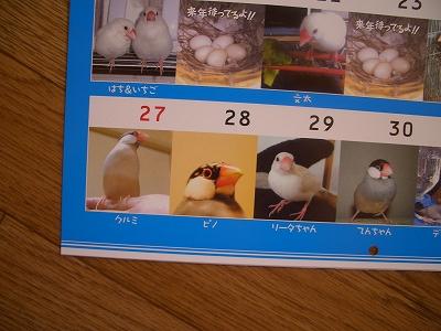 7月28日はトンボの誕生日なんです、これがww