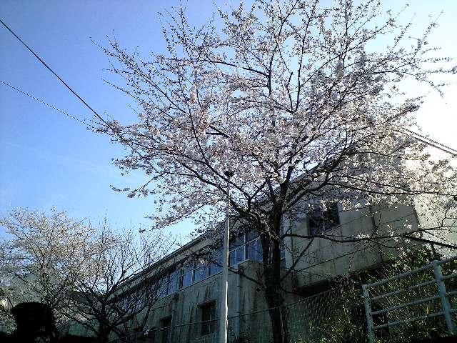 桜も咲き始めました。