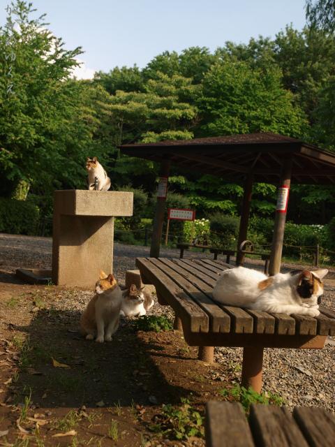 猫達とベンチ