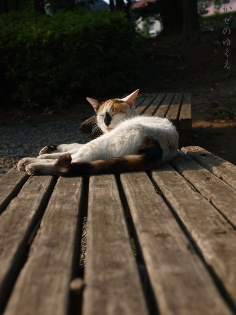 猫とベンチ(2)