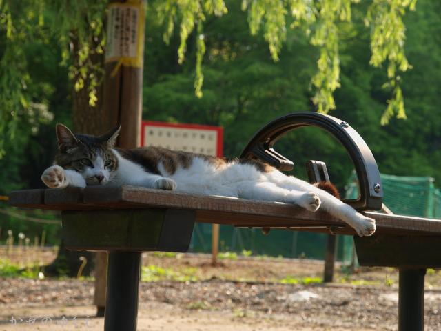 猫とベンチ(1)