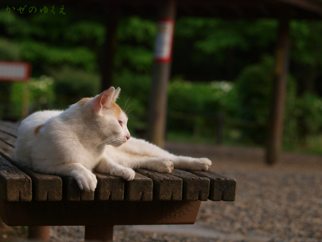 猫とベンチ(3)