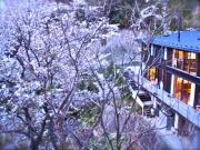 11桜と中村邸