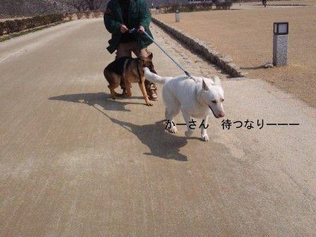 レオンと散歩