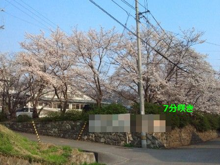 NEC_4379_20120405164329.jpg