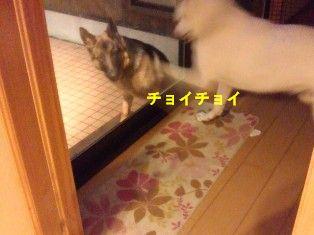 NEC_4799.jpg