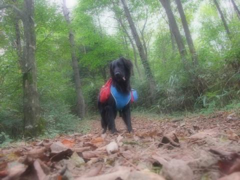 竜ヶ岳キャンプ&トレック1