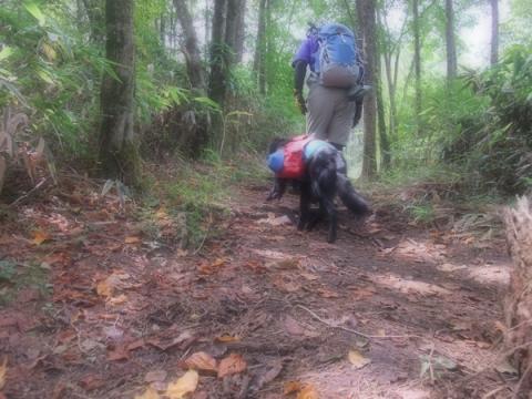 竜ヶ岳キャンプ&トレック4