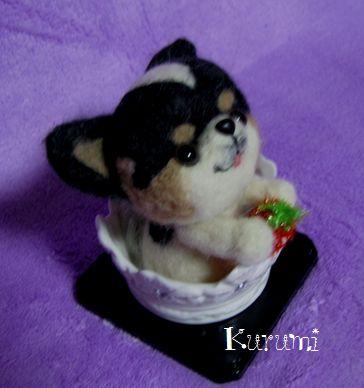 bIMG_3936_20120406185849.jpg