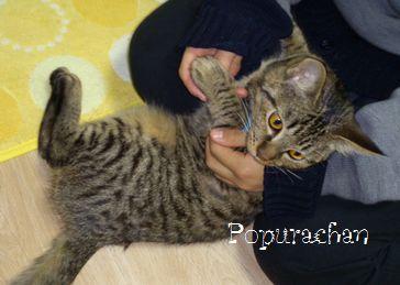 popurachan2.jpg