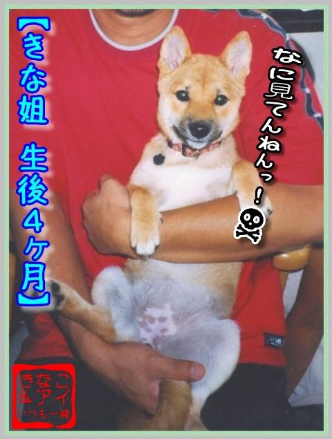 XSきなこ(生後4ヶ月)