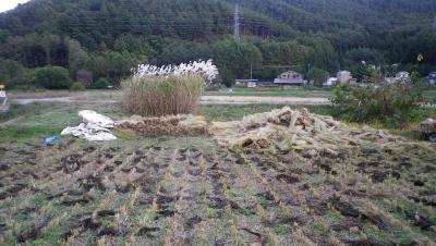 2011-10-31田んぼ