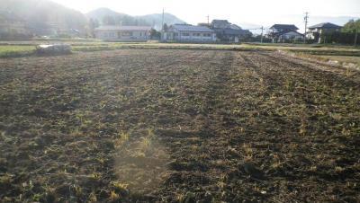 2011-11-1田んぼ