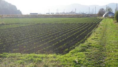 2011-11-1黒麦1