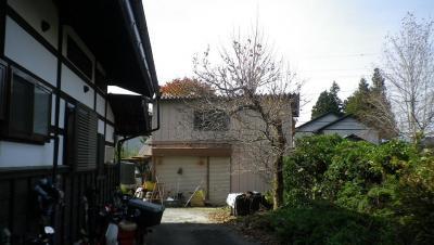 2011-11-2柿取り3