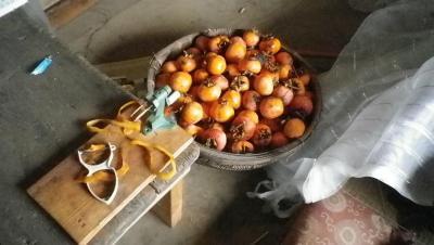 20110-11-7干し柿