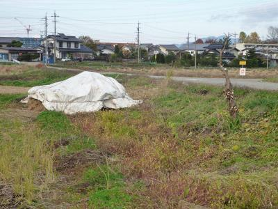 2011-11-8田んぼ1