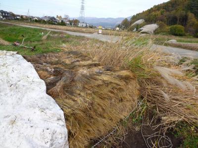 2011-11-8田んぼ