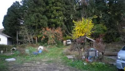 2011-11-15柿