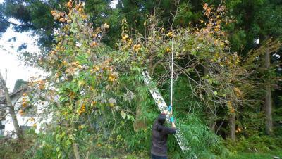 2011-11-16柿