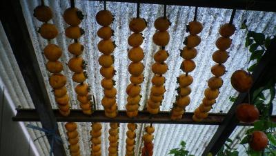 2011-11-17柿