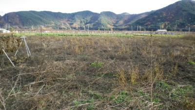 2011-11-21大豆