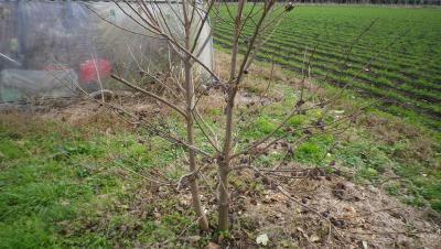 2011-11-21小柿