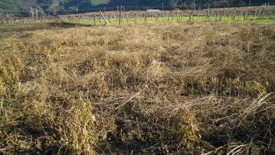 2011-12-4大豆