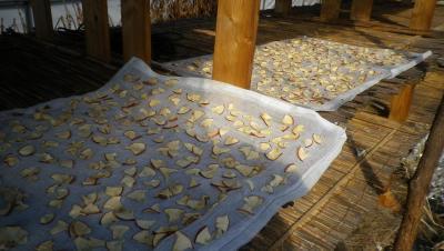 2012-2-21リンゴ接木