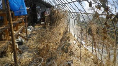 2012-2-27黒麦