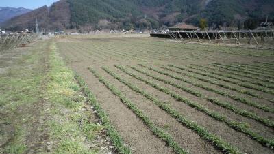 2012-3-21黒麦2