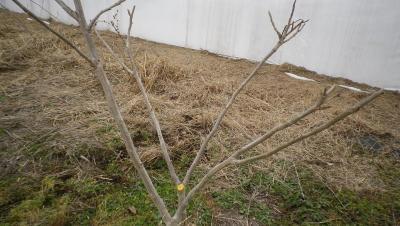 2012-3-22肥まき