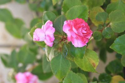 2009-10-22_01.jpg