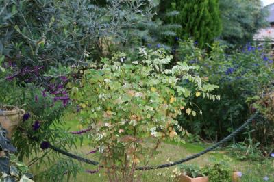 2009-10-25_27.jpg
