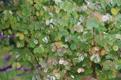 2009-10-25_32.jpg
