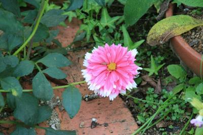 2009-10-27_12.jpg