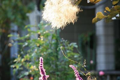 2009-10-29_41.jpg