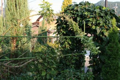 2009-10-31_16.jpg
