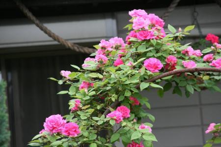 2011-05-21_103.jpg