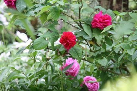 2011-05-24_21.jpg