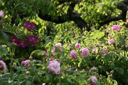 2011-05-24_42.jpg