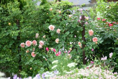 2011-05-27_99.jpg