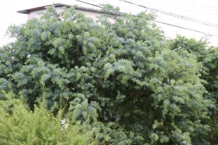 2011-06-25_50.jpg